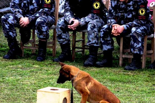 Emprego de cães de faro é tema de simpósio em Porto Alegre