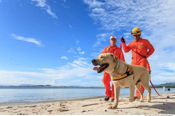 Cães participam de missões de Busca e Salvamento em Florianópolis