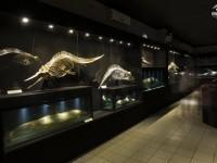 Entre os destaques estão esqueletos de animais marinhos da fauna Brasileira (Crédito: Maurício Martins Pereira)