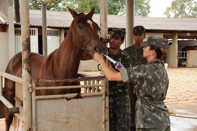 Dia da Veterinária Militar