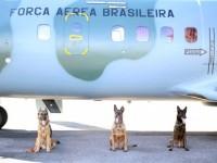 Cães da Força Aérea em Manaus participam de faro em presídio do Acre