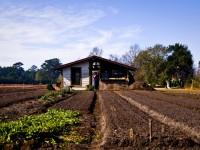 agricultura ceara onu br