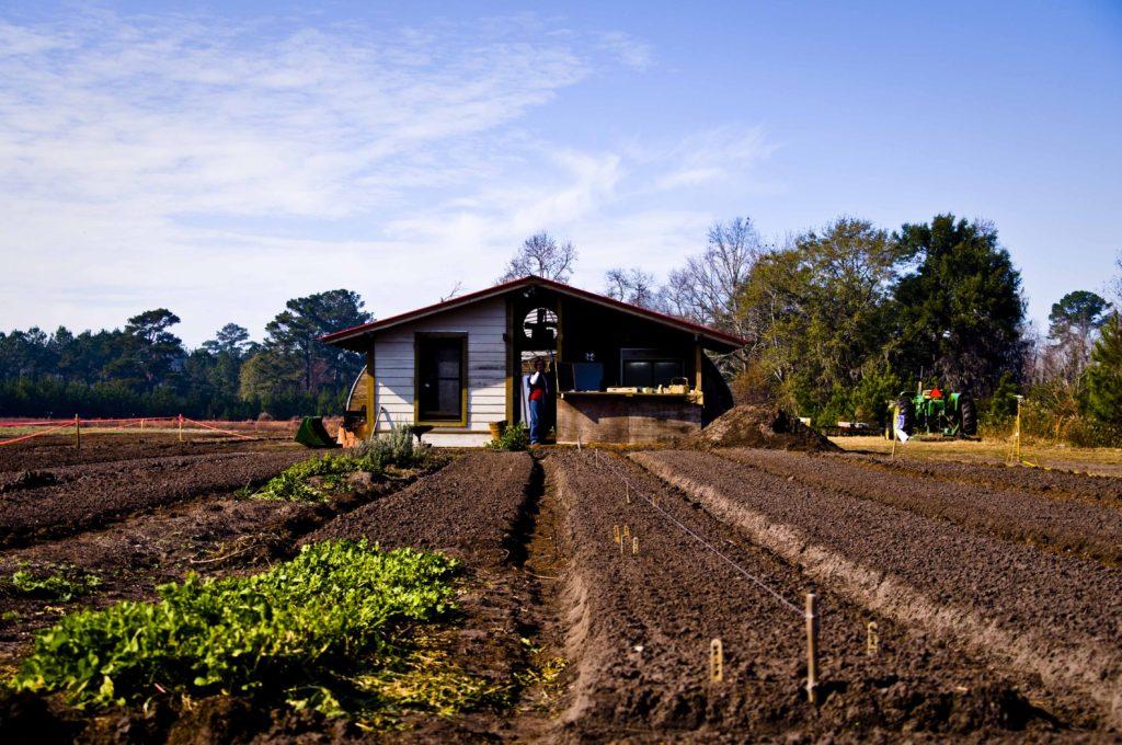 Fundo da ONU apoia projeto de apoio à agricultura familiar no Ceará