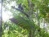 macacos prego fab
