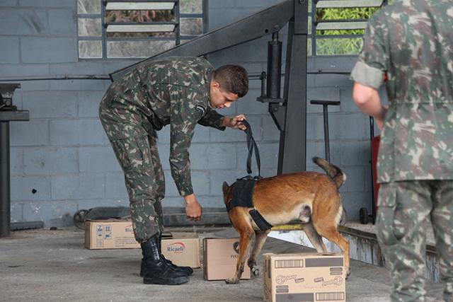 Aperfeiçoamento profissional: militares concluem Estágio de Adestrador de Cães de Guerra em Osasco