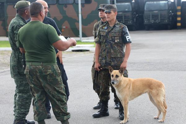 Cães da FAB se destacam no 3º Encontro Brasileiro de Cinotecnia Militar