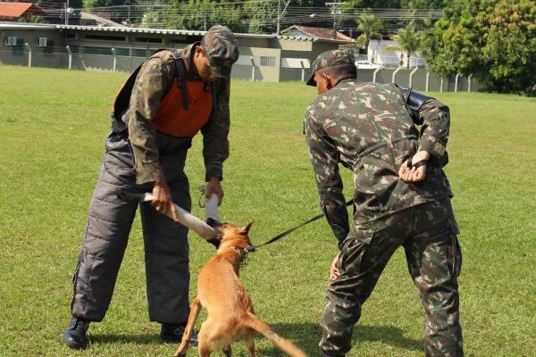 Grupo de Segurança e Defesa forma condutores de cães de guerra no Amazonas