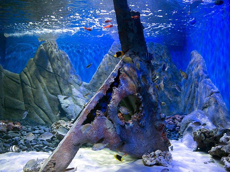 Recinto de Trindade é inaugurado no AquaRio