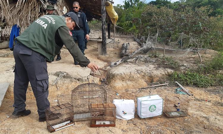 Operação Verde Brasil realiza apreensões no estado do Pará
