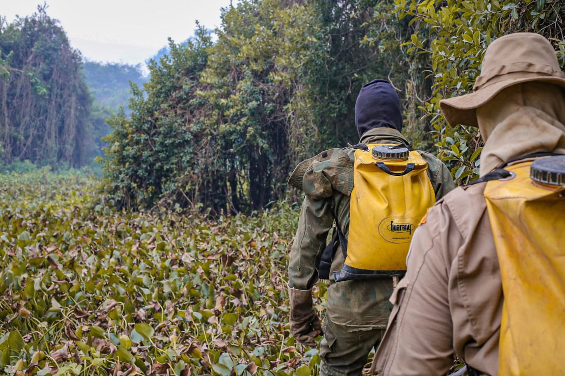 Operação de combate às queimadas é reforçada diariamente no Pantanal